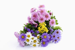 Pink, yellow, white chrysanthemums and purple asters Stock Image