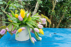 Pink yellow white daffodils bell flowers on a table in a garden, center focus blur background at springtime in a park Stock Images
