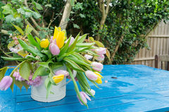 Pink yellow white daffodils bell flowers on a table in a garden, center focus blur background at springtime in a park Royalty Free Stock Photo
