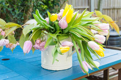 Pink yellow white daffodils bell flowers on a table in a garden, center focus blur background at springtime in a park Stock Photography