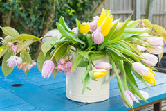 Pink yellow white daffodils bell flowers on a table in a garden, center focus blur background at springtime in a park Royalty Free Stock Images