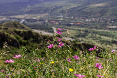 Pink and yellow wild flowers on the village and mountains and natural background. Stock Photos