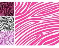 Pink zebra skin animal print pattern Royalty Free Stock Image