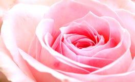 Pinken steg Arkivfoto