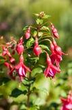 Pinkfarbene Blume lizenzfreie stockfotografie