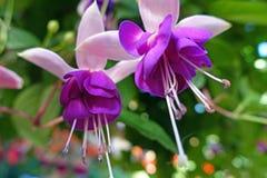 Pinkfarbene Blume Stockbild