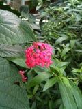 Pinkfarbene Blume im Grün Lizenzfreie Stockfotos