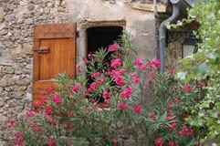 Pinkfarbene Blumen über einem Fenster Stockbild