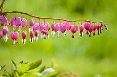 Pinkfarbene Blumen Stockfoto