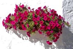 Pinkfarbene Blumen Lizenzfreie Stockfotos