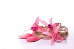 Pinkfarbene Blumen mit einem beige Bogen Stockfotos