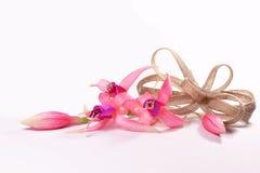 Pinkfarbene Blumen mit einem Bogen Stockbild