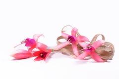 Pinkfarbene Blumen mit einem Bogen Stockfotografie