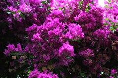 Pinkflowers imagenes de archivo