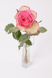 Pinkisch and white rose in glass vase on white Stock Images