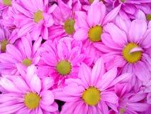 Pinkish flowers background. Sweet  natural wallpaper Stock Image