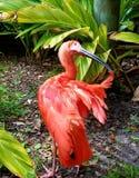 Pinkish bird shushing stock photo
