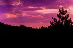 Pinkish sunset sky and clouds photo at pine forest. Clouds and pine trees scene stock image
