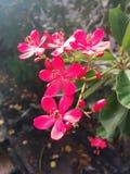 Pinklittleflower HD Royalty Free Stock Image