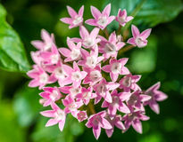 PinkMacro Stock Photography