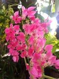 Pinkmeisje stock foto