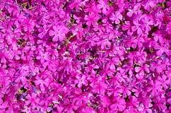 Pinkmuur Royalty-vrije Stock Fotografie