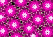 Pinks de Bloemen van Purples royalty-vrije illustratie