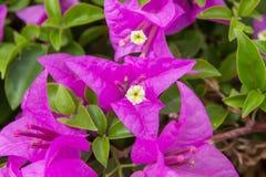 Pinks floral macro Royalty Free Stock Photos