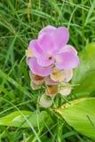 Pinks floral Stock Photos