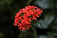 pinks red Fotografering för Bildbyråer