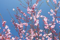 Pinktree Stock Images