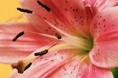 Pinky стоковые изображения