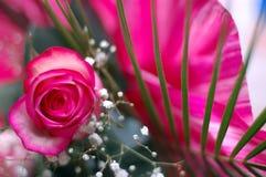Pinky-branco levantou-se em uma composição Fotos de Stock Royalty Free