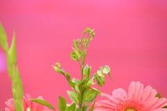 Pinky Stock Photos