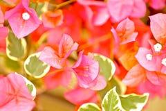 Pinky Plants - fiori Fotografia Stock Libera da Diritti