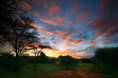 Pinky sunrise. Africa Kenya Samburu national park stock images