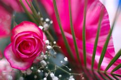 Pinky-white rose in a composition. Garden flowers in a bouquet Royalty Free Stock Photos