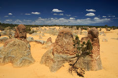 Pinnacles Desert,Western Australia Stock Photography