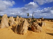 Western Australia, Pinnacles Desert stock photography