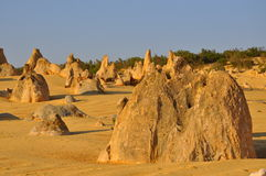 Pinnacles: Limestone Formations in Western Australia stock image