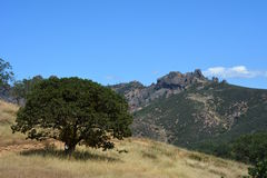 Pinnacles national park high peaks with oak tree. Spring at Pinnacles National Monument - drought conditions California Soledad United States USA Stock Image