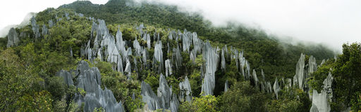 Pinnacles. In the national park of mulu Malaysia Stock Photo