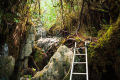 Pinnacles trek in gunung mulu national park Royalty Free Stock Photos