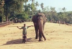 Pinnawala, Шри-Ланка, 21-ое октября 2011: Слон с человеком в питомнике Стоковая Фотография RF