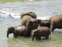 Pinnawala elephant orphanage in Sri Lanka Stock Images