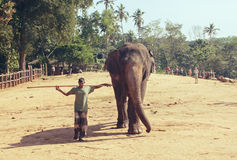 Pinnawala, Sri Lanka, Październik 21, 2011: Słoń z mężczyzna w pepinierze Fotografia Royalty Free