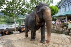 从Pinnawela大象孤儿院(Pinnawala)的一头大象开始它从玛哈大矢河的步行到孤儿院 库存图片