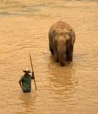 Pinnawela Elefant-Waisenhaus in Sri Lanka Lizenzfreie Stockfotos