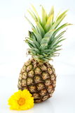 Pinneapple with flower Royalty Free Stock Image
