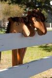 Pinnehästar Royaltyfri Fotografi